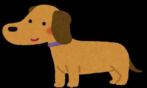 【突然の血尿】犬さまが膀胱炎になった