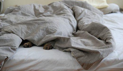 【激安!電気敷き毛布】朝まDEウォーム